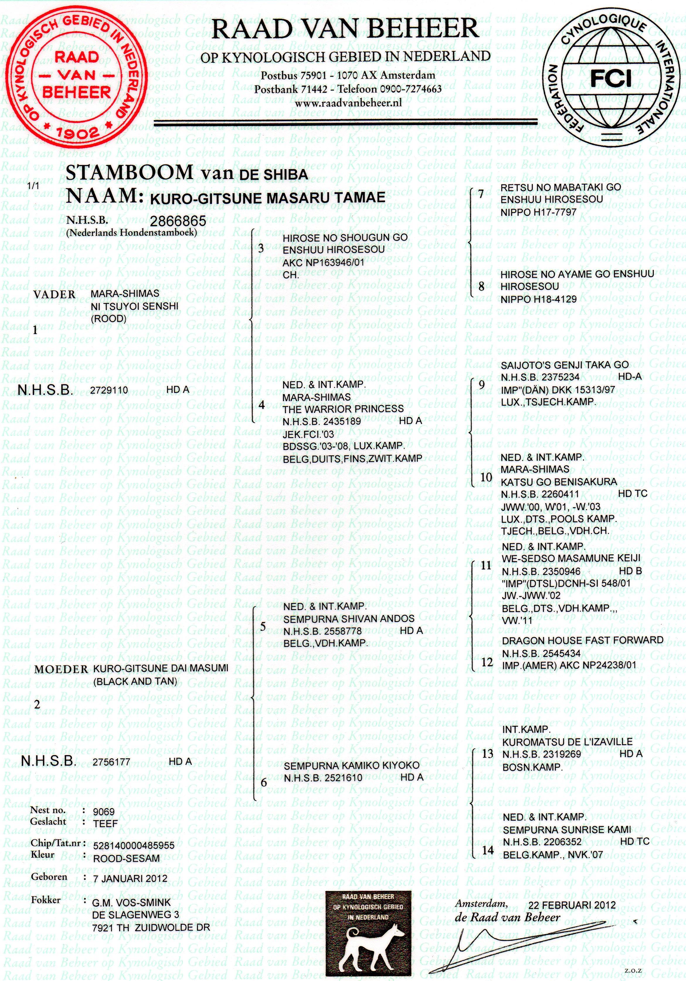 Saru stamboom (2)