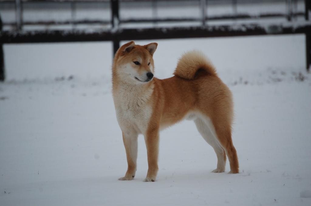 Bo Sneeuw (12)