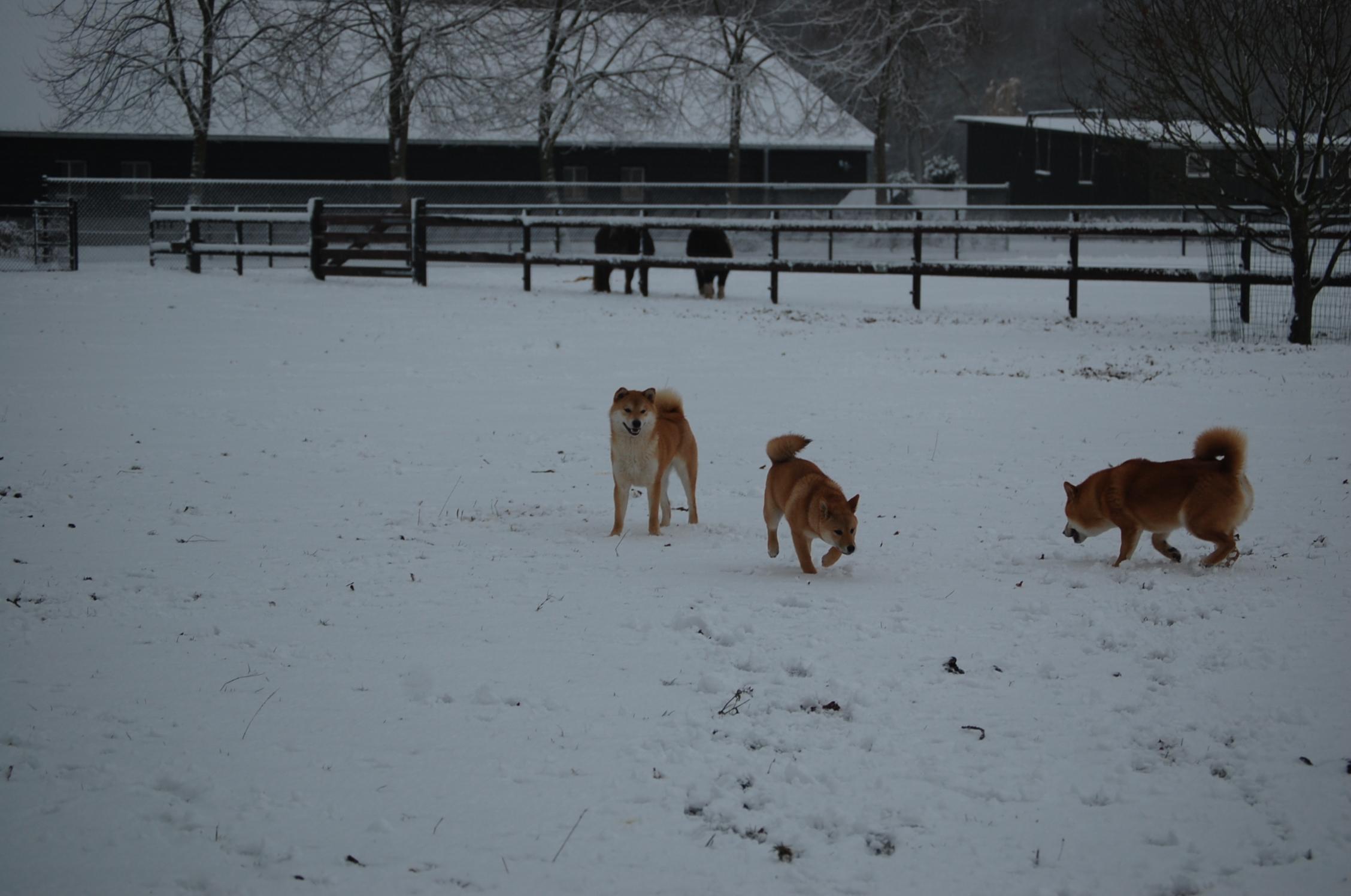 sneeuw-2015-017